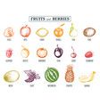 fruits and berries hand drawn vector image vector image