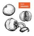 Oranges - set of vector image