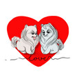 valentine two white dogs in vector image vector image