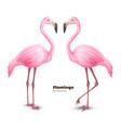 realistic 3d pink flamingo set vector image