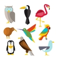 Set of Wild Arctic Forest and Tropical Birds in vector image