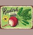 radish poster vector image vector image