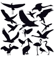Set of different photographs of birds isolated on vector image