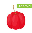 acerola berry superfoodcartoon flat style vector image vector image