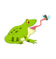 cartoon frog catching a fly vector image vector image