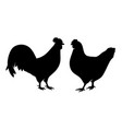 chicken rooster vector image vector image