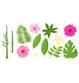 set tropical leaves flowers and bamboo vector image