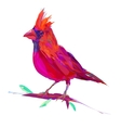 The cute red cardinal exotic bird vector image