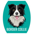 border collie pet isolated on white vector image vector image