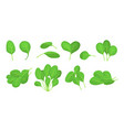 cartoon fresh green spinach leaves icon set vector image vector image