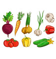 vegetables isolated on white background vector image vector image