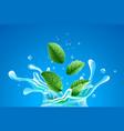 water splash with green mint vector image vector image