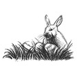 Hand sketch rabbit and Easter eggs vector image