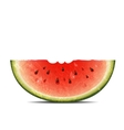 watermelon slice on white background vector image