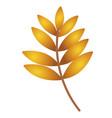 autumn leaf autumn maple leaf isolated on a white vector image