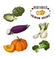 vegetable element of artichoke eggplant vector image