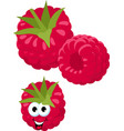 raspberry fresh raspberry berries isolated on vector image