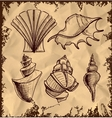 Sea shells collection on vintage background vector image