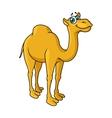 Fun cartoon camel animal character vector image