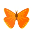 Colored cartoon Cabbage butterfly isolated vector image vector image