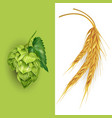 hops and malt vector image