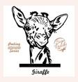 peeking giraffe - funny giraffe out - face vector image vector image
