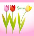 three spring tulips vector image vector image