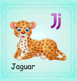 animals alphabet j is for jaguar vector image