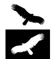 flying eagle or bird of prey silhouette vector image