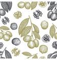 hand drawn sketch walnut seamless pattern organic vector image vector image