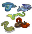 set of colorful moray eels isolated on white vector image vector image