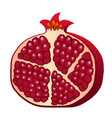 burgundy red half of pomegranate isolated on vector image vector image