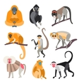 Set of Primates and Monkeys vector image vector image