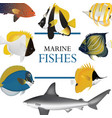 tropical fish collection marine vector image vector image