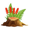 aloe vera with red flowers on white background vector image vector image