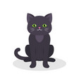 black cute cat with green eyes sitting vector image