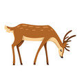 brown deer hoofed ruminant mammals cartoon animal vector image vector image