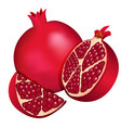 dark red pomegranate and a half pomegranate and vector image vector image