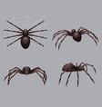 spider realistic nature insects crawl venom black vector image