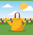 watering can and field of tulips and landscape vector image
