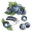 blueberry hand drawn set vector image vector image