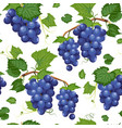 grape vine seamless pattern and leaves on white vector image vector image
