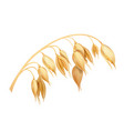 oat realistic vector image vector image