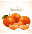 ripe mandarin vector image
