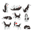 siberian husky character sett dog in different vector image