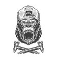 angry gorilla head in hipster cap vector image vector image