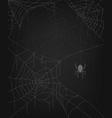 a set several spider webs on a dark background vector image