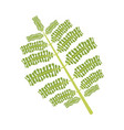branch and leaves of tropical plants fronds vector image