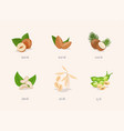 different variation plant based milk nuts set vector image vector image
