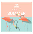 hello summer background with two pink flamingos vector image vector image